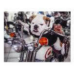 Bulldog on Motorcycle Postcards