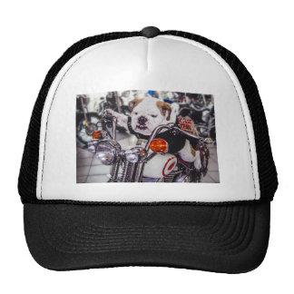 Bulldog on Motorcycle Trucker Hat