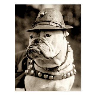 Bulldog on patrol wearing hat and cape postcard