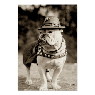 Bulldog on patrol wearing hat and cape poster