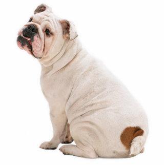 Bulldog Photo Sculpture Key Chain