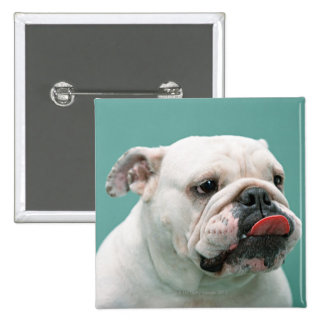Bulldog Pinback Button