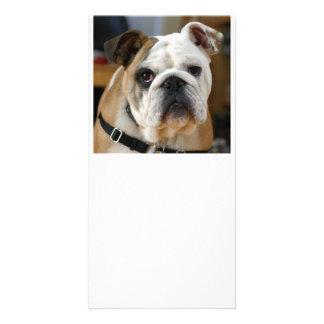 Bulldog.png Card