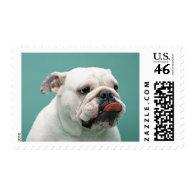 Bulldog Postage Stamps