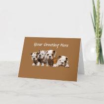 Bulldog Puppies Card