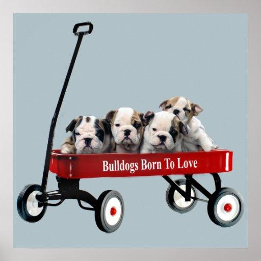 Bulldog Puppies In Wagon Print