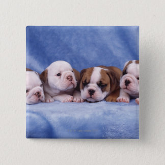 Bulldog puppies pinback button