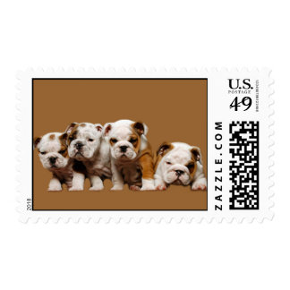 Bulldog Puppies Postage