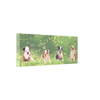Bulldog  Puppies Time Out To Smell The Flowers Canvas Print