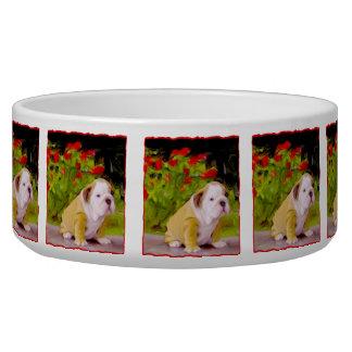 Bulldog puppy bowl
