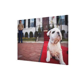 Bulldog Puppy Canvas Print