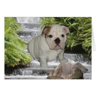 Bulldog Puppy Card Waterfall