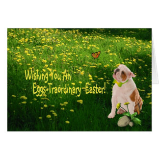 Bulldog Puppy Eggs -Traordinary Easter Wishes Card