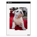 Bulldog Puppy iPad 3 Decals
