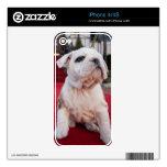 Bulldog Puppy iPhone 4S Skins