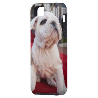 Bulldog Puppy iPhone SE/5/5s Case