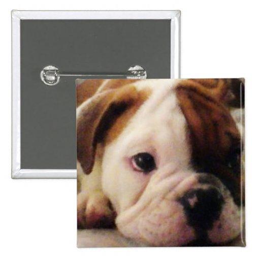 Bulldog puppy pin