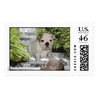 Bulldog Puppy Postage Waterfall