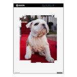 Bulldog Puppy Skin For iPad 2