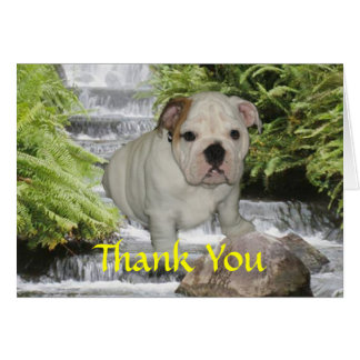 Bulldog Puppy Thank You Card