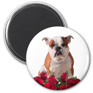 Bulldog Red Roses Bloom Birthday Anniversary Magnet