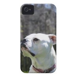 Case-Mate iPhone 4 Barely There Universal Case with Boxer Phone Cases design