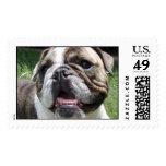 Bulldog Stamp