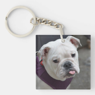 Bulldog Taunt Keychain