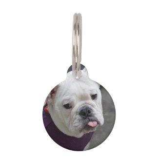 Bulldog Taunt Pet Tag