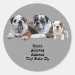 Bulldog Trio Address Label Classic Round Sticker