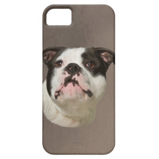 Bulldog Water Color Art Painting iPhone SE/5/5s Case