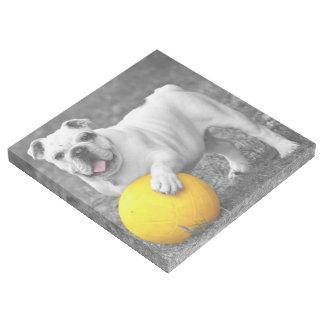 Bulldog with Ball Gallery Wrap