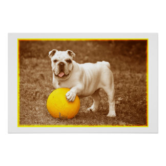 Bulldog With Ball Poster