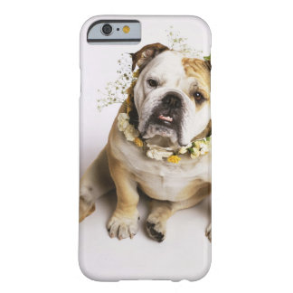 Bulldog with flower collar barely there iPhone 6 case