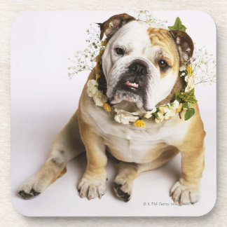 Bulldog with flower collar drink coaster