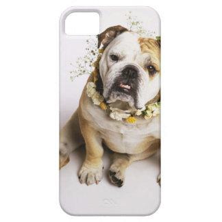 Bulldog with flower collar iPhone SE/5/5s case