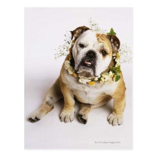 Bulldog with flower collar postcard