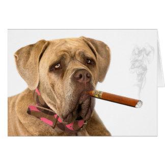 Bulldog with sigar