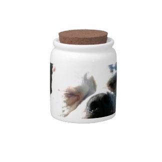 Bulldog Yawn Candy Jar