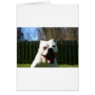 Bulldog Yawn Card