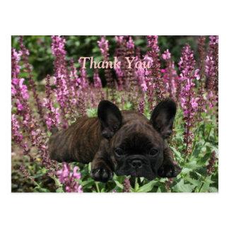 Bulldoges franceses tarjeta postal Thank You
