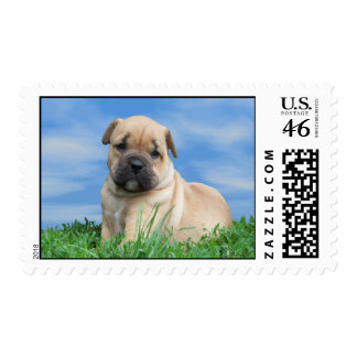 Bulldogge Puppy Postage Stamps