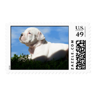 Bulldogge Puppy Stamp