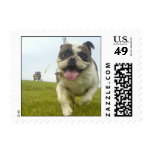 bulldogs free at the park postage stamp