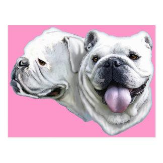 Bulldogs Postcard