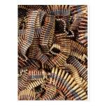 Bullets, ammunition postcards