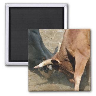 Bullfight Refrigerator Magnets