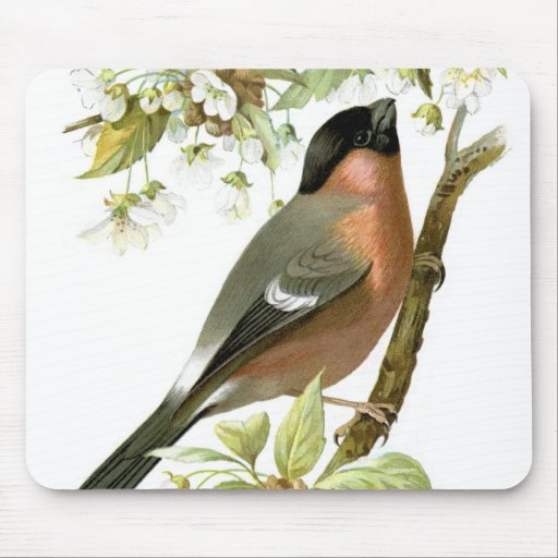 Bullfinch Alfombrillas De Raton