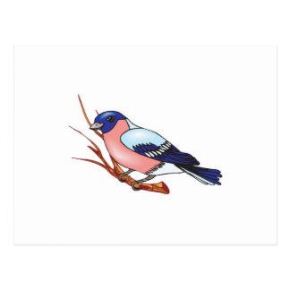 bullfinch bird postcard