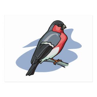 Bullfinch del pájaro tarjetas postales